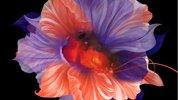 牧かほり個展 Landscape ~芯花~